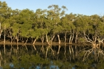 Mangroves transitions