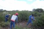 Bush Encroachment