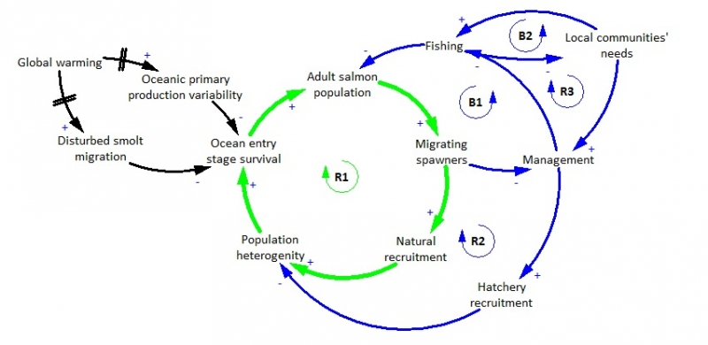 Potential salmon collapse causal loop diagram potential salmon collapse in the north pacific ocean ccuart Image collections
