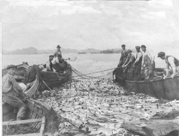 Collapse of Newfoundland cod fisheries, Northwest Atlantic